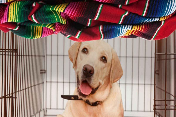 How to Keep Your Dog Comfortable and Secure With Dog Kennel and Runs